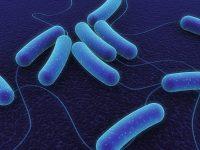 Бактерии больше любят женщин