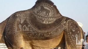 Фестиваль верблюдов Исламад, Пакистан