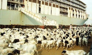 Судна с Сомали с козами и овцами