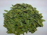 Сенна — очень полезное растение