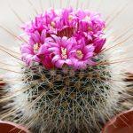 Vatika кактус от выпадения