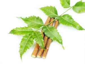 Кора Нима обладает выраженным антисептическим действием — многие индусы используют веточки дерева в качестве зубной щетки, как например мишвак(сивак), ветки дерева Арак. Некоторые до сих пор жуют листья Нима, так как считается, что они очищают кровь. Раньше листья Нима накладывали на раны, синяки и нарывы — так они быстрее заживали Ним обладает выраженным антисептическим свойством в отношении целого ряда простейших и паразитов, являясь также эффективным противовоспалительным средством. Так как это уникальное растение обладает этими лечебными свойствами, современные производители зубных паст не могли обойти ее стороной.