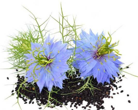 Цветок черного тмина